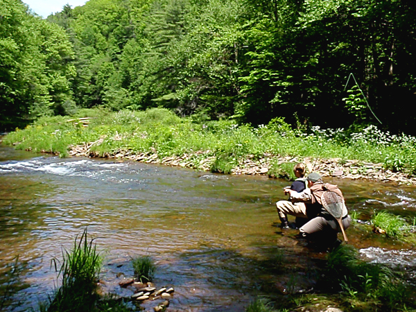Fly fishing guide service pa fly guide your guide to for Fishing in pa