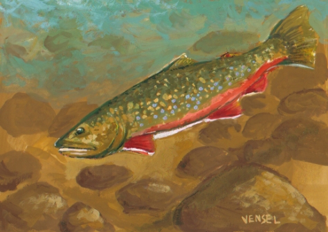 Brook Trout (Salvelinus fontinalis)