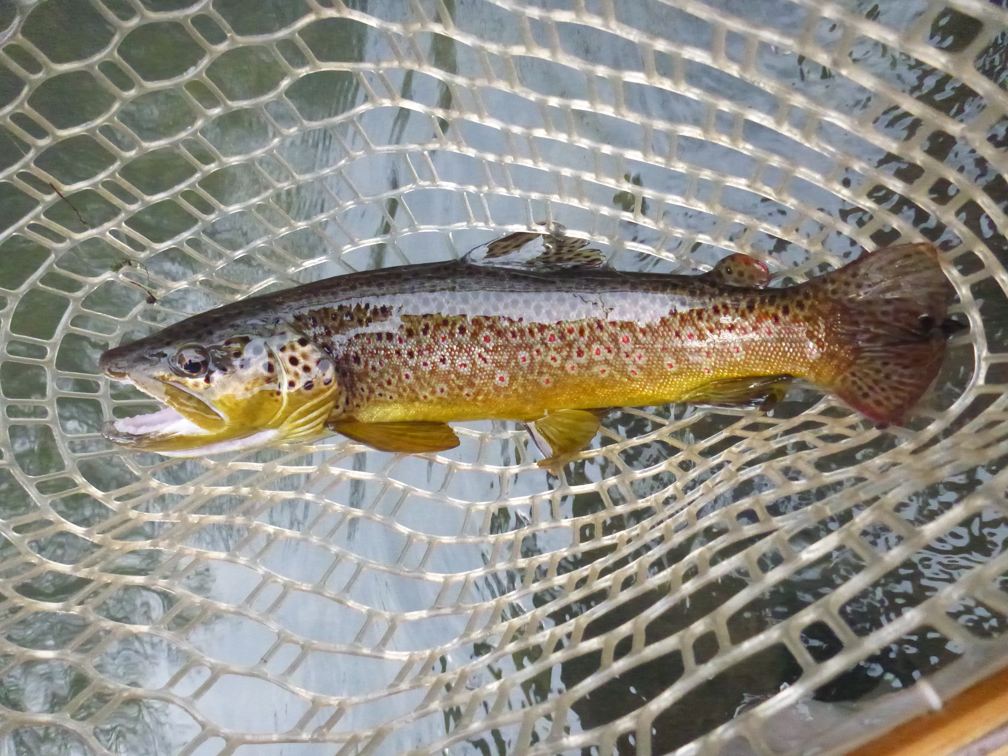 Early march on spring creek state college pa pa fly for Fishing in pa