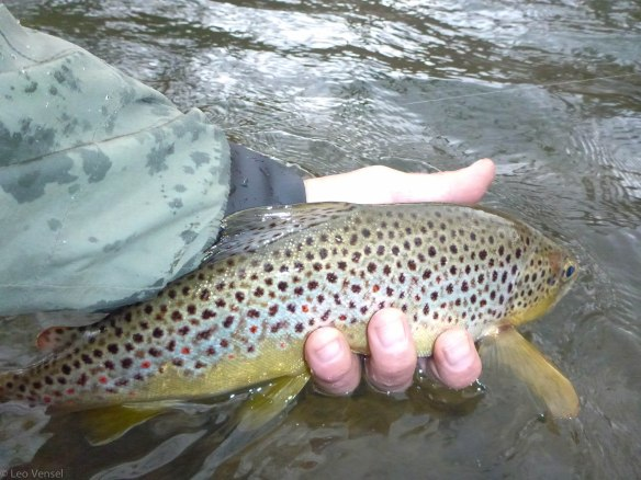 paflyguide1 | PA FLY GUIDE | Your Guide to Pennsylvania Fly